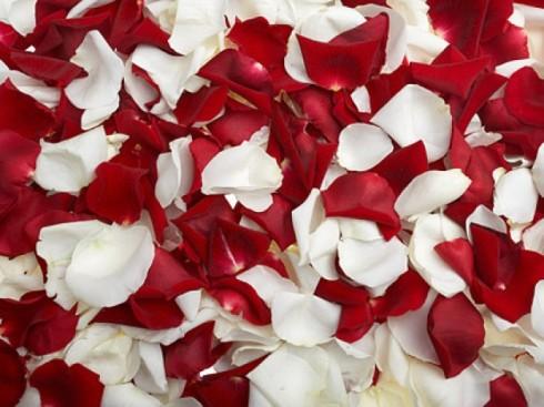 rosas-vermelhas-e-brancas-petalas-de-rosa_38-4193