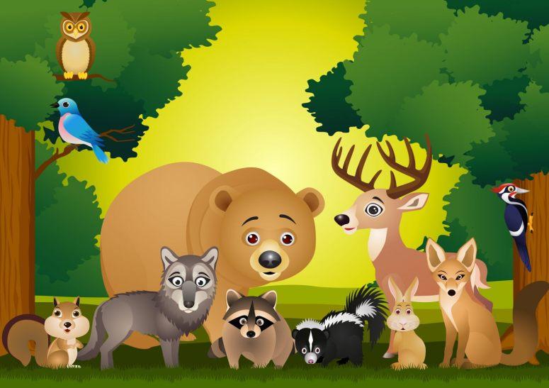 animais-da-floresta